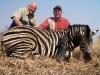 dan_zebra