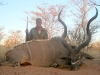 joyce_taylor_kudu